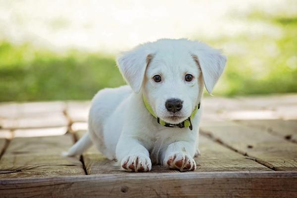 fare un bagnetto al proprio cane